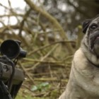 Sgt. Pugsley The Sniper Pug